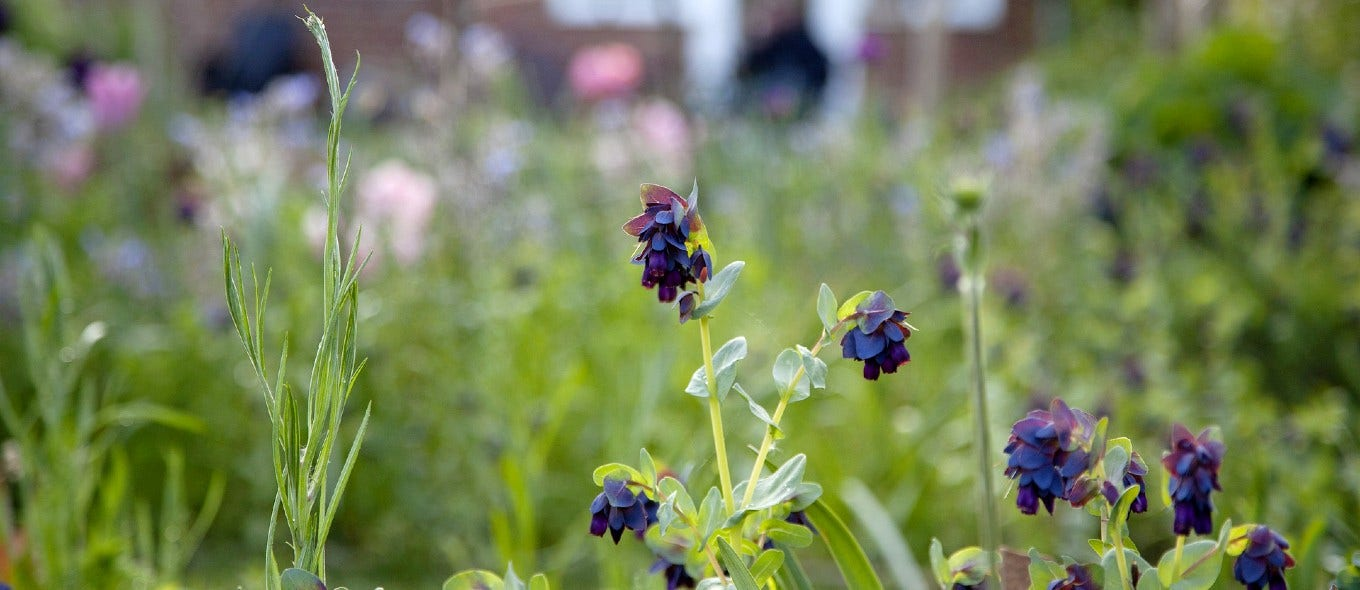Expert tips to make the most of your garden