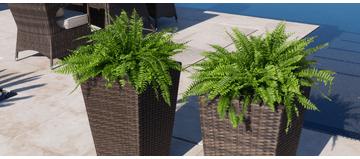 Matching Rattan Twin Planters